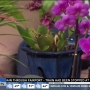 Celebrate spring at the 43rd annual Orchid Show & Sale