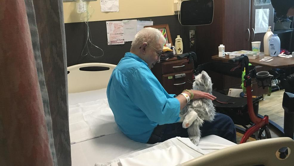 Robotic pets give Asheville veterans a source of companionship at the
