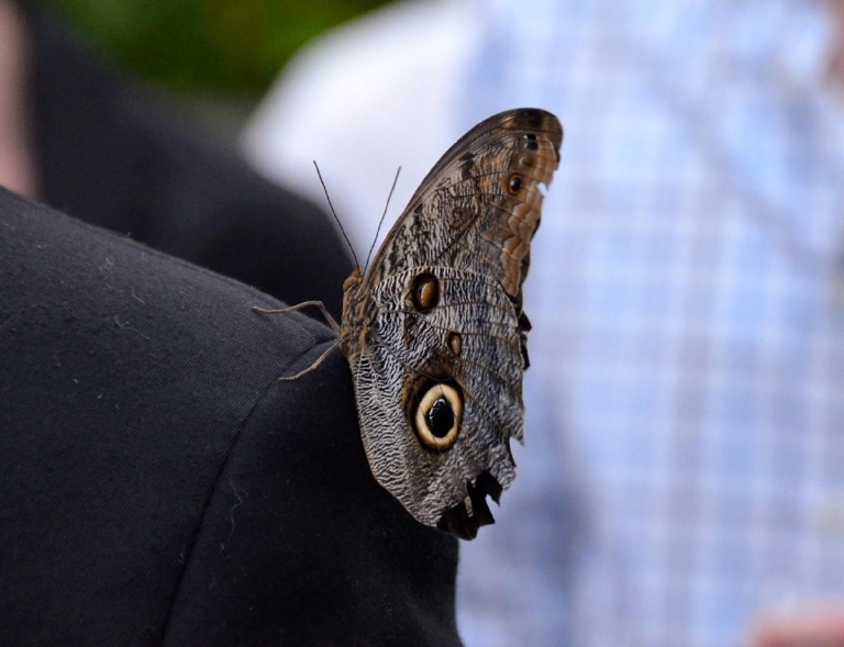 Hosted by the Cincinnati Parks' Ambassadors Advisory Council, Butterflies After Dark, which highlights the Butterflies of the Philippines spring event at Krohn Conservatory took place on Thursday, April 23. (Image: Leah Zipperstein / Cincinnati Refined)