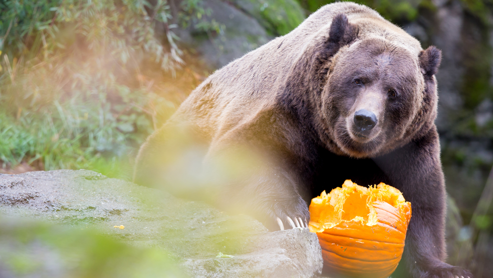 bear enrichment.jpg