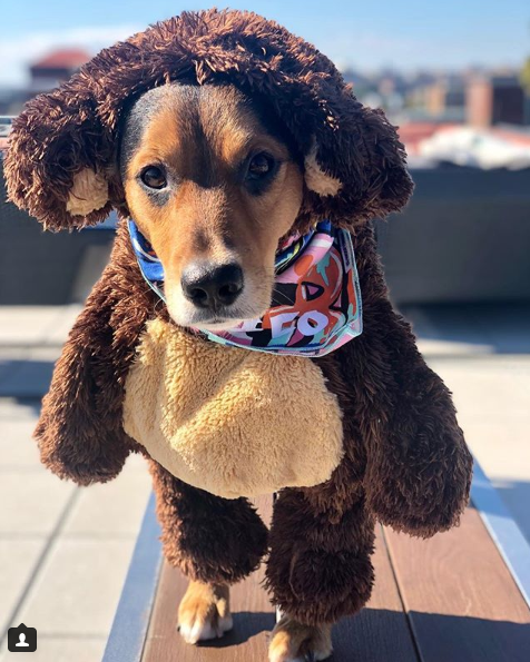 Well this little overachiever enjoyed 31 days of Halloween costumes and we could not pick just one! Which one is your fav? (Image: via IG user @notorious_chico)