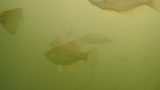 WV Wildlife: Improving Fish Habitat at Summersville Lake