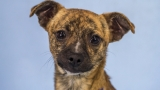 Photos: 8 adoptable pets from Woodinville Homeward Pet
