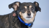 PHOTOS: 8 adoptable pets from Woodinville's Homeward Pet