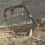 I-16 and I-95 tree cutting raising questions and concerns for Ogeechee Riverkeeper