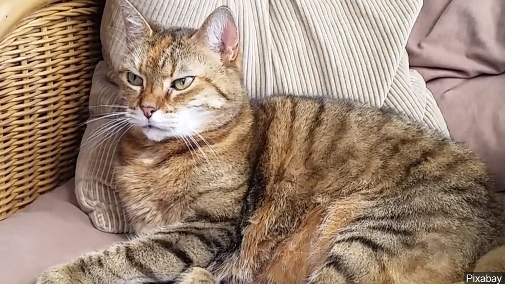 cat female name
