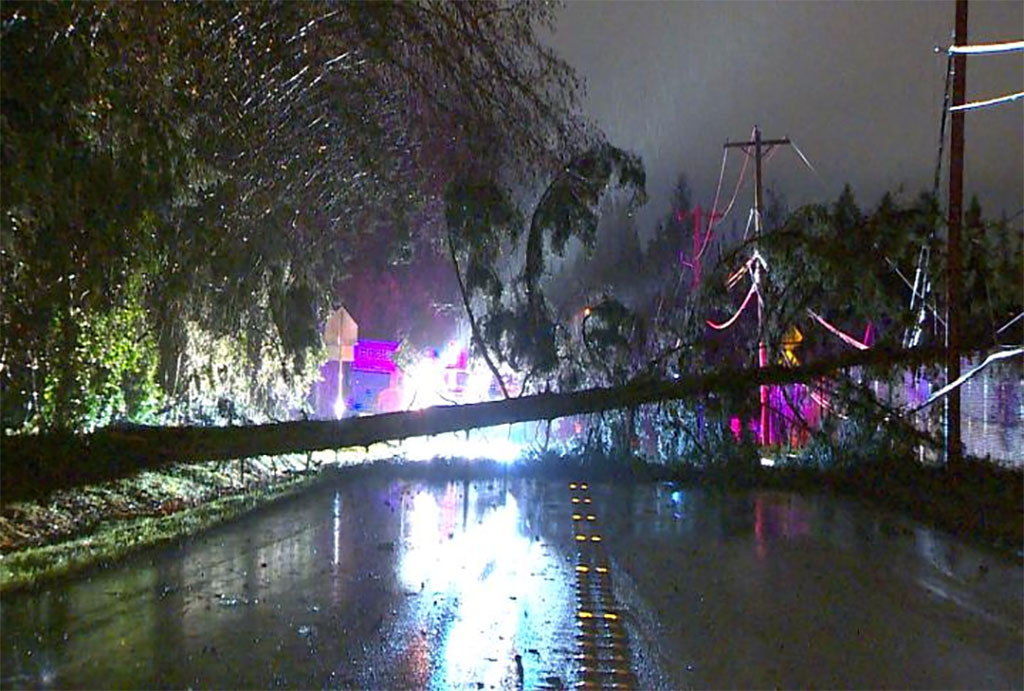 Crews respond to a fallen tree that blocked 4th Avenue West and knocked out power in Bothell. (KOMO photo)