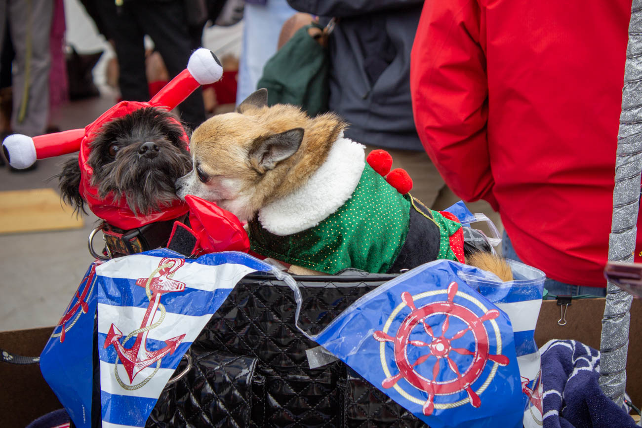 The categories for the costume competitions included Small Dogs (under 25 lbs), Large Dogs (25 lbs and over), Dog/Owner Look-a-Like, Multiple Dogs (three or more dogs in a group), and Best in Show. / Image: Katie Robinson // Published: 12.15.19