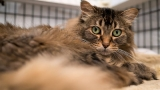 Photos: Woman pays adoption fees hoping to find new homes for these cats by Christmas