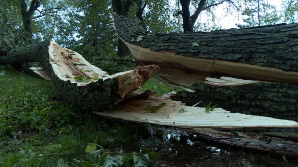 DOWNED TREE portage storm.jpg