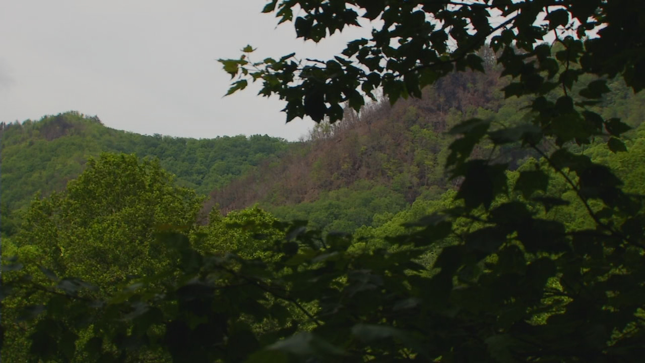 Ridgeline shows the burn scare in the Nantahala Gorge.