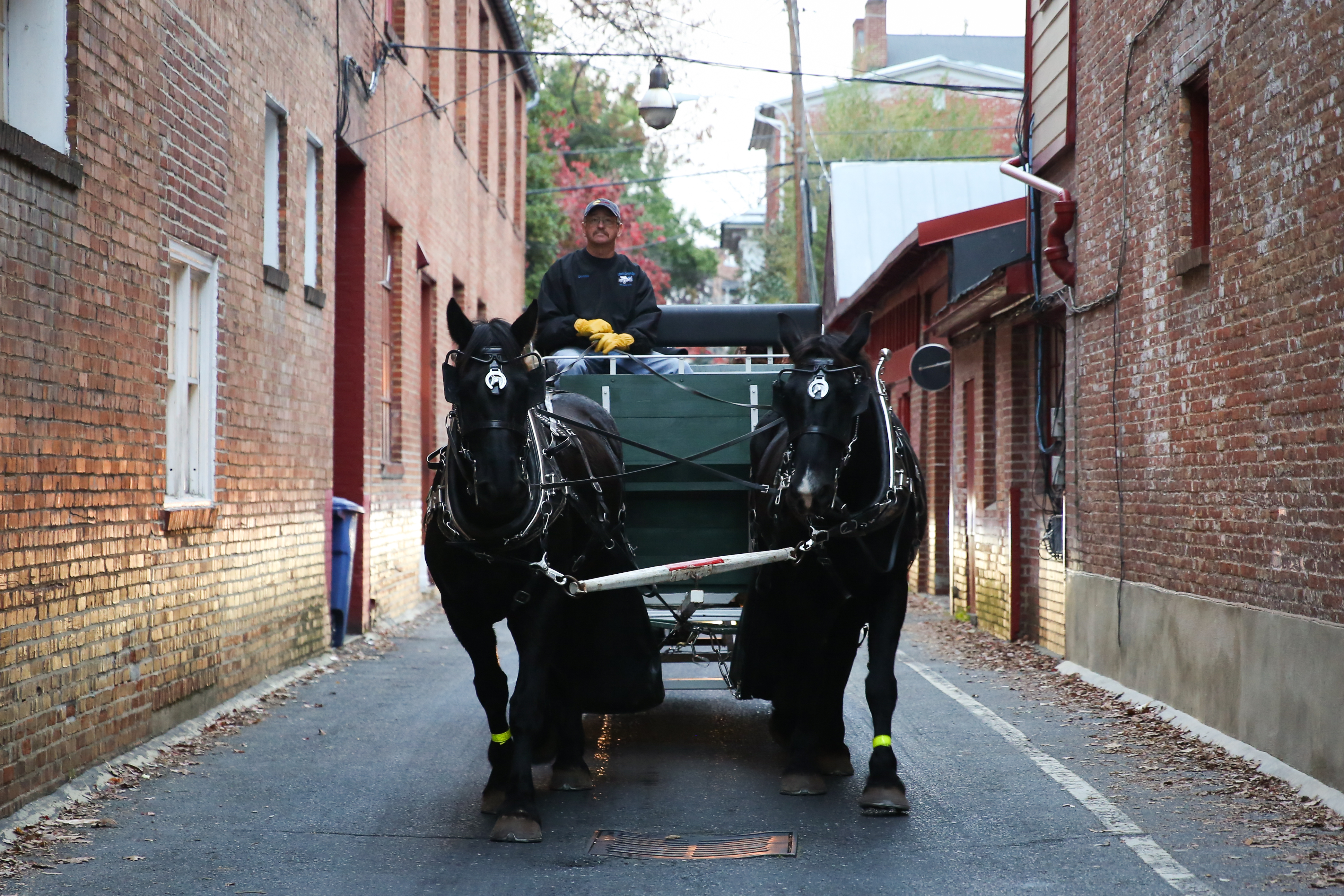 Carriage rides give you a chance to get cozy with your loved ones while you enjoy the festive decorations around Downtown Frederick, and they're a big hit with kids.{ } (Image: Amanda Andrade-Rhoades/ DC Refined)