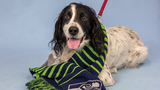 8 adoptable pets from Woodinville Homeward Pet