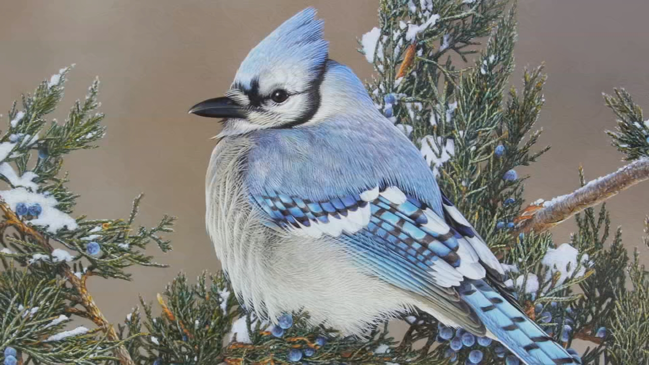 The artwork is all original paintings instead of photographs.{&amp;nbsp;} February features this blue jay by Adam Grimm. (WCHS/WVAH)<p></p>