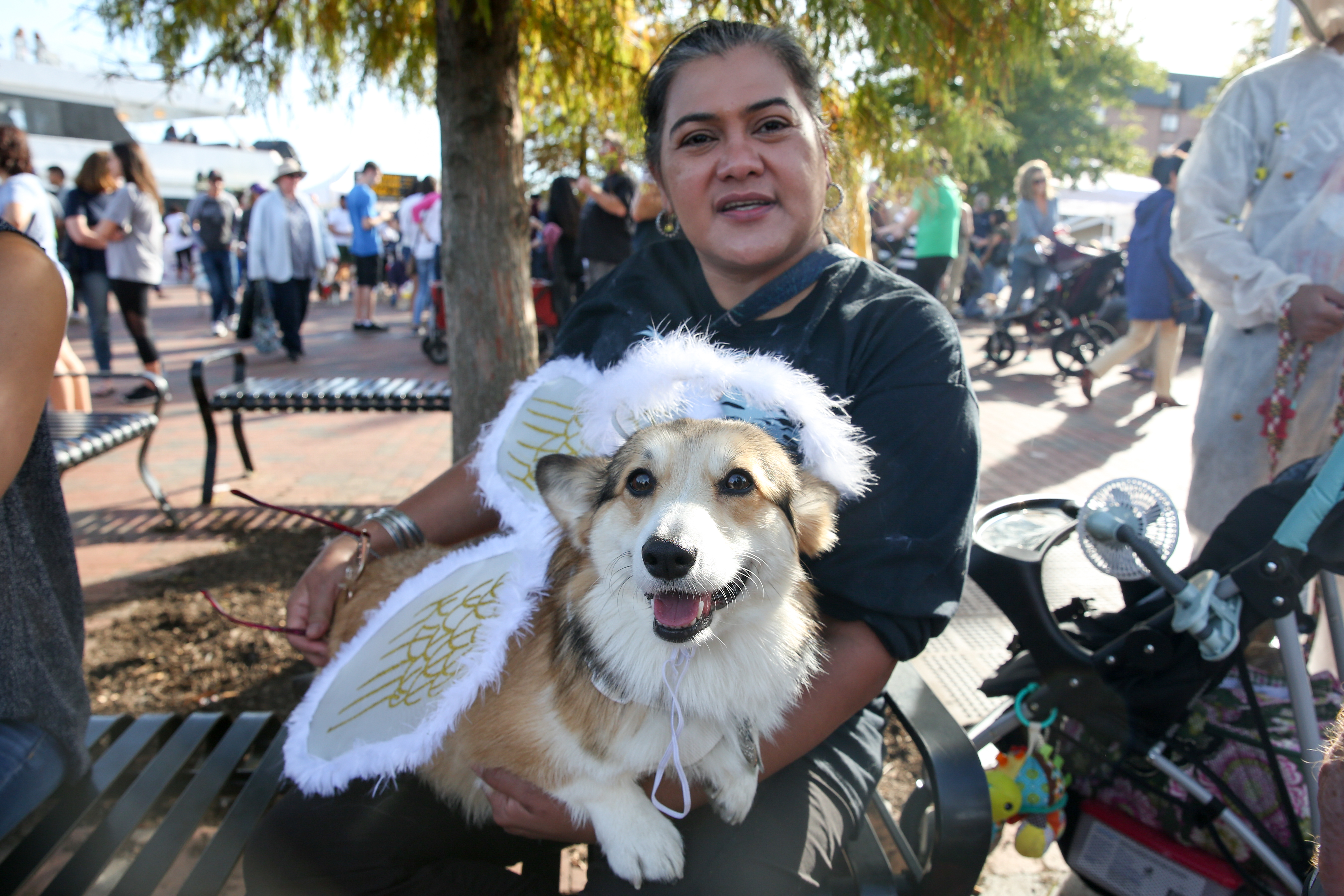 This corgi is paws-itively angelic.{ }(Amanda Andrade-Rhoades/DC Refined)