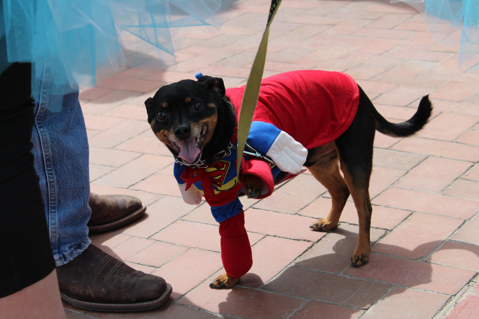 Residents (and some with their pets) dressed up in their favorite superhero costumes in Caldwell over the weekend to help bring awareness to child abuse. (Photo courtesy Canyon County){ }{ }