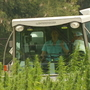 Officials gather grain from first industrial hemp test plots in WNC