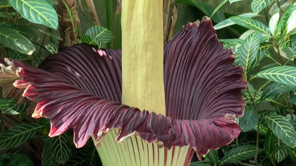 CorpsefLOWER.PNG