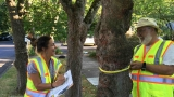 Portland's 220,000 street trees have been counted and cataloged, so now what?