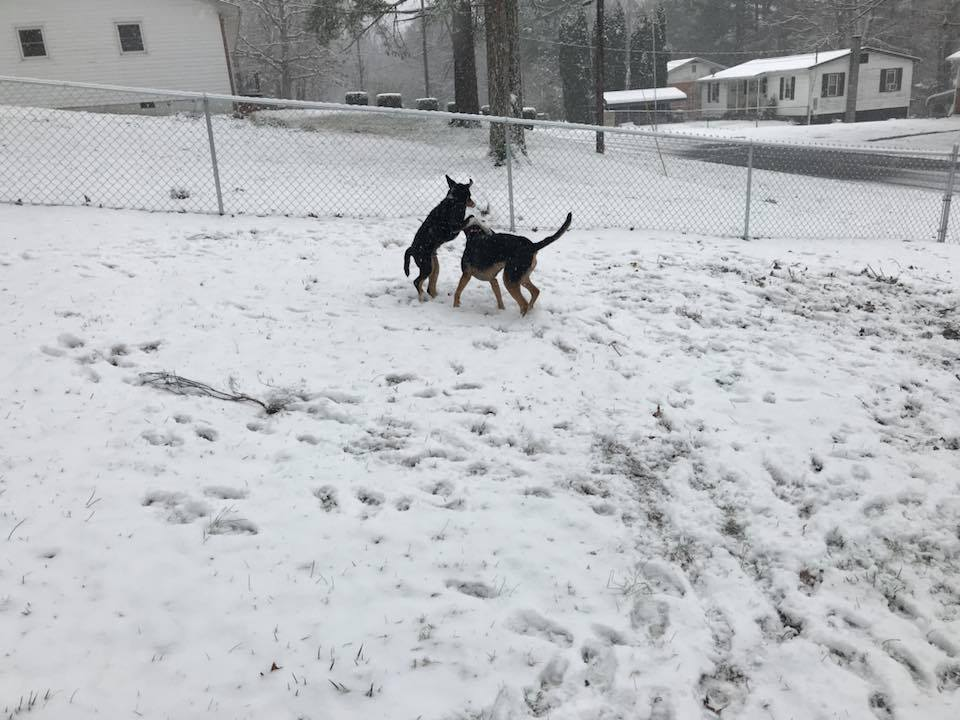 Ollie & Chester in the snow!Photo by: Ashley Kepley-Steward