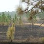 "Landowner says his controlled burn ""jumped"" road: 'Everywhere you looked there was smoke'"