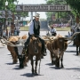 Check out the Fort Worth cattle drive in virtual reality 360