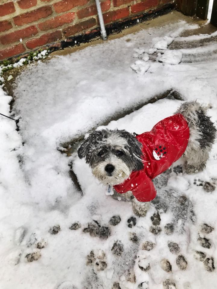 D.C. finally got its first real snowfall of the season -- on March 21! Given that it's the probably the only flakes we'll see for a while, the pups of the DMV decided to really live it up. Check out a few of the adorable pets we spotted chilling in the snow today!  (Image: Courtesy Sammi Heffron)