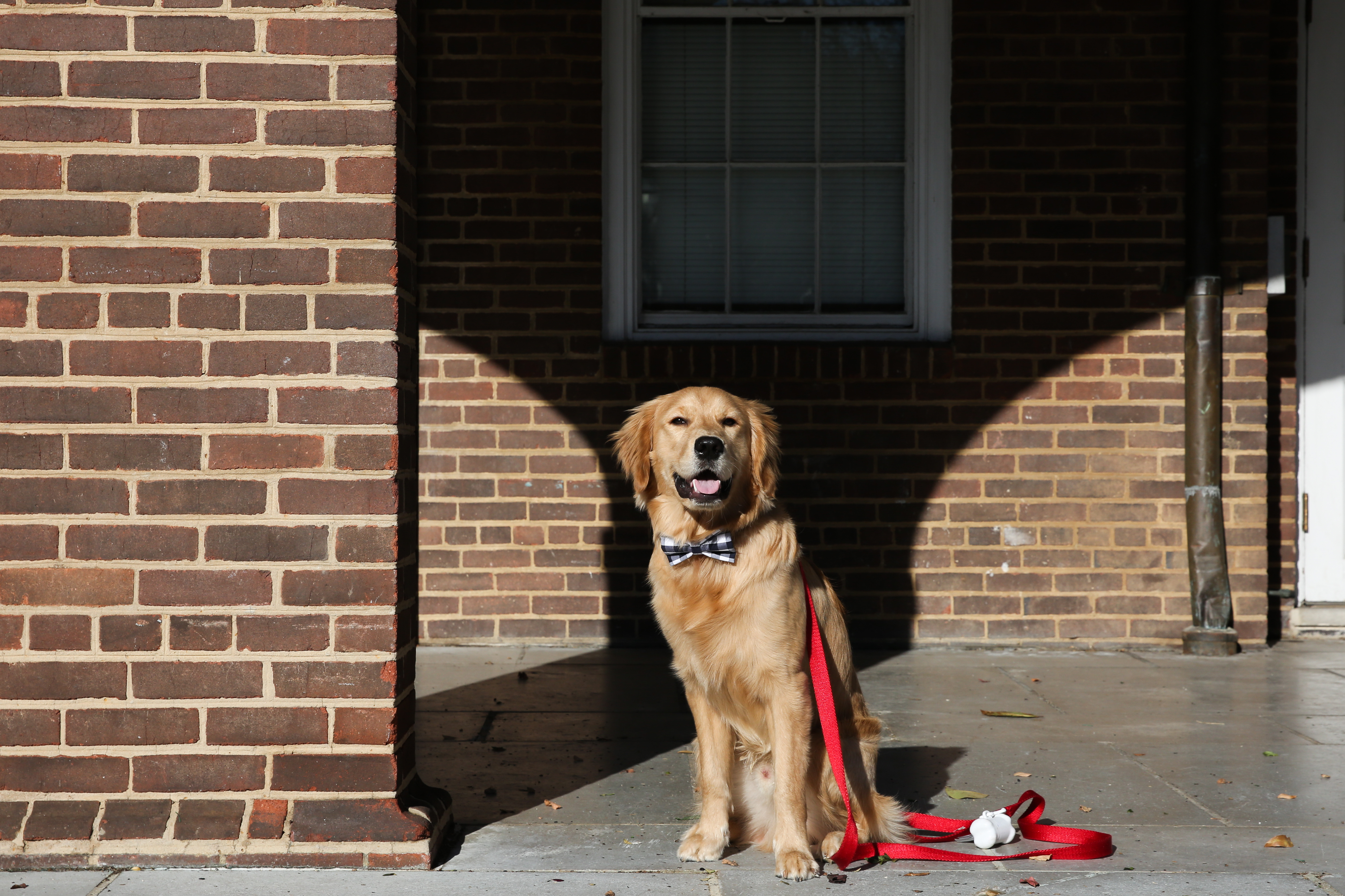 Meet Brinkley, a nine-month-old Golden Retriever pup who hails from Charlottesville, Virginia. Brinkley LOVES food -- from peanut butter to watermelon, strawberries, hardboiled eggs and bok choy, he'll pretty much eat it all! He also loves to meet new people and dogs, and has no concept of stranger danger. Similar to his human mom (who collects rubber ducks), Brinkley likes duck toys. Brinkley loves the winter but isn't a big fan of the D.C. summer heat. In the summer, he goes straight to the A/C. In the winter, he likes to lie next to the window where the floor is a bit colder. He's also not a huge fan of baths. Since he came to live with his human family, Brinkley has been to UVA twice, and even went apple picking at nearby Carter Mountain Orchard. He always gets affection from students, faculty, and visitors, and he loves the Lawn and the Rotunda -- Brinkley is definitely a Hoos boy! You can follow Brinkley's life of adventures on his Instagram account @brinkleyfromva. If you or someone you know has a pet you'd like featured, email us at dcrefined@gmail.com or tag #DCRUFFined and your furbaby could be the next spotlighted! (Image: Amanda Andrade-Rhoades/ DC Refined)