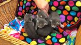 City crews find 3-week-old kittens inside bucket at illegal dump site