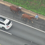 Loose horses tie up rush-hour traffic in Massachusetts
