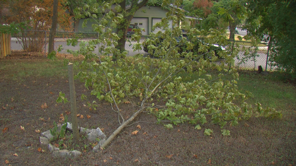 Austin man says thief chopped tree in front yard to steal bike locked to it