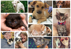 10 animals whose lives were changed forever by Asheville Humane Society