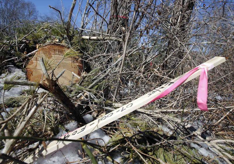 <p>Downed trees and surveyors sticks mark the route of the Atlantic Coast Pipeline in Deerfield, Va., Thursday, Feb. 8, 2018. Work is progressing on clearing a path for the pipeline. (AP Photo/Steve Helber)</p>