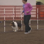 """Ruff"" competition at the CPE Dog Agility Trial"