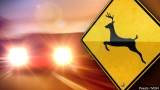 Two deadly morning crashes involved deer