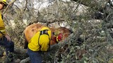 Lake Tahoe firefighters save horse and property near Loma Rica