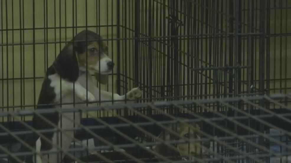 Law Texas Passes About Dogs In Pet Stores