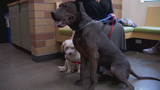 Meet 'Biggie' & 'Smalls': Woman adopts two stray Oregon dogs who became best friends