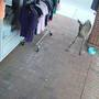 Caught on Camera: Deer 'shops' at Newport store
