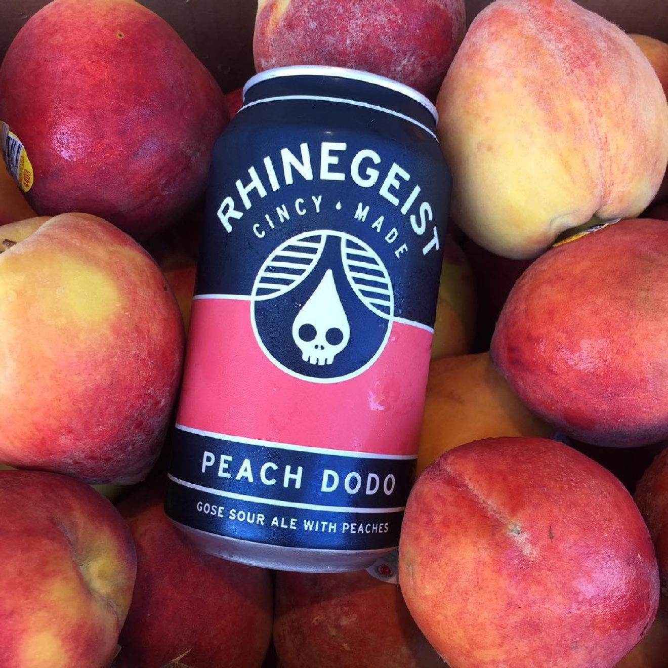 PEACH DODO by Rhinegeist Brewery / Sour and salty, this German gose is perfect for a picnic, but it doesn't come out until June. / Image courtesy of Rhinegeist Brewery // Published: 1.10.17