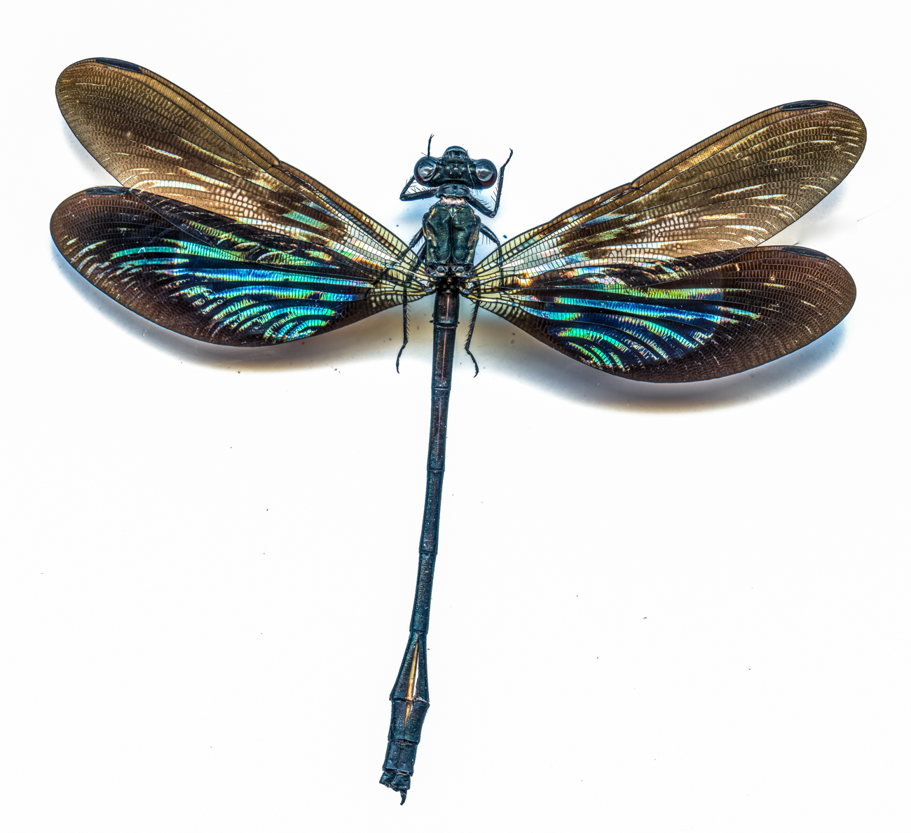Damselfly{ }/ Image: Catherine Viox // Published: 4.12.20