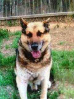 On Monday, the Oklahoma County Sheriff lost a retired member of its K9 unit. But any officer will tell you the dogs do more than detect drugs, bombs, and find criminals; they're part of the force. And the sheriff sent Eron off the same as other officer.