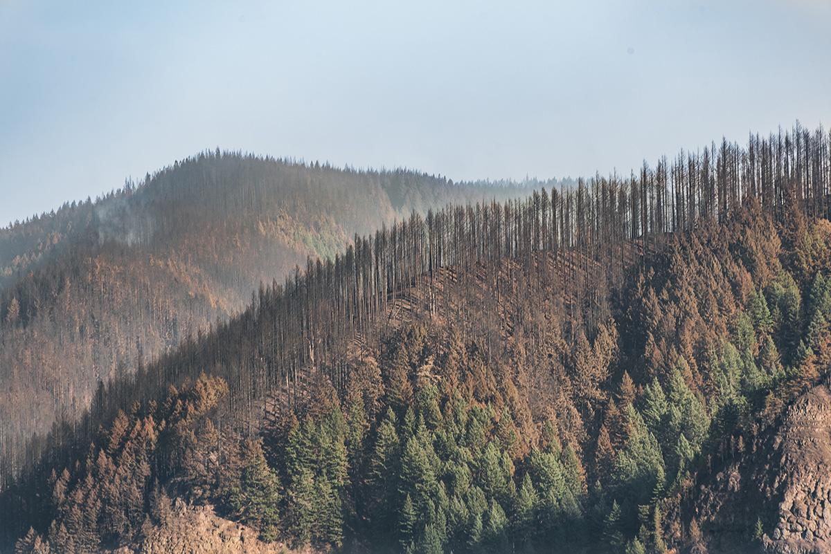 Ridgeline above Oneonta Creek - Crews are working to contain the Eagle Creek Fire, a human-caused fire burning thousands of acres in Oregon's Columbia River Gorge and threatening several natural landmarks. (Photo taken by Chris Liedle on September 10, 2017)