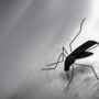 Alabamian dies from West Nile Virus; ADPH urges protective measures