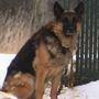 Animal Control determines dog left outside not mistreated