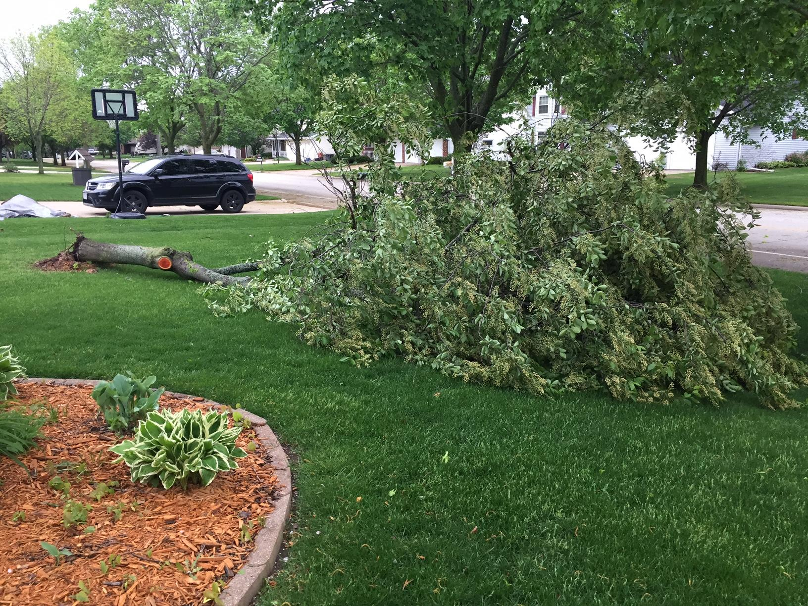 A tree down in Ashwaubenon. 5-18-17 (Courtesy: FOX 11 News)