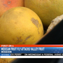 Mexican Fruit Fly attacks Valley fruit