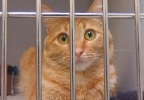 ba8b9157-c71c-40f9-9186-94c966040e59-120803_Canyon_Animal_Shelter_06.jpg