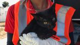 Pet rescued from house fire in West Palm Beach