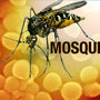 Mosquitoes infected with St. Louis encephalitis identified in El Paso
